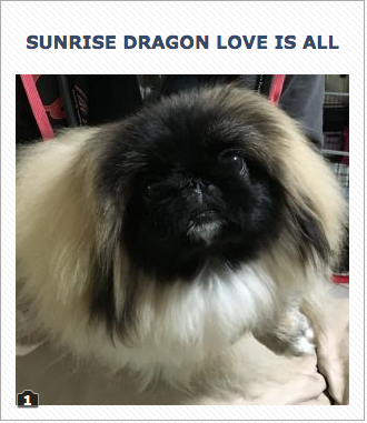 SunriseDragon Love Is All